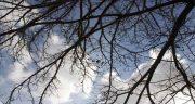 تعبیر خواب شاخه ، شکستن و بریدن شاخه درخت میوه و خشک درخت انگور