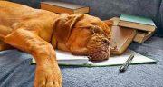شعر در مورد سگ با وفا ؛ اشعاری زیبا در مورد وفاداری سگ ها با اسنان